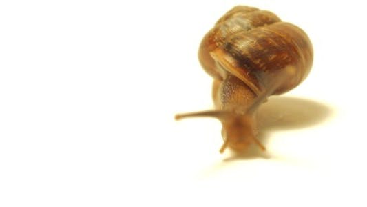 Thumbnail for Snail on White