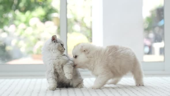 dorable kitten and puppy fighting together,slow motion
