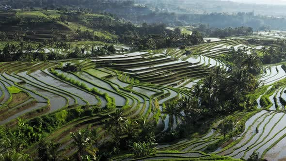 Thumbnail for Aerial Top View Of Water Filled Paddy Rice Terraces, Green Agricultural Fields In Countryside Or