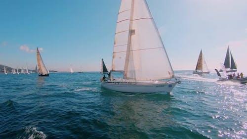 Regatta or Sailing Race on Sunny Summer Day