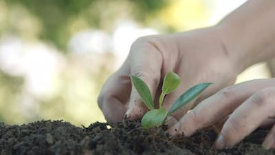 Close up hands plant small tree green leaf. Save the earth for planting forest
