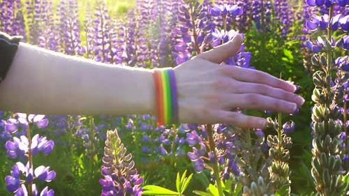 Hand with LGBT Bracelet at Sunset Touches Blooming Flowers Conceptclose Up