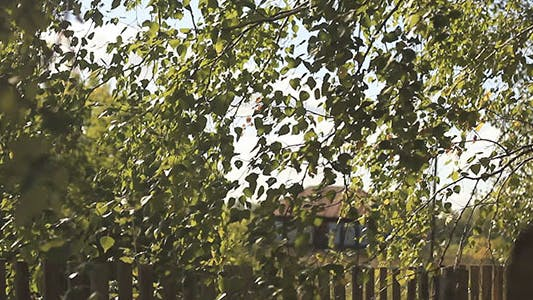 Thumbnail for Birch Leaves And Country House 2