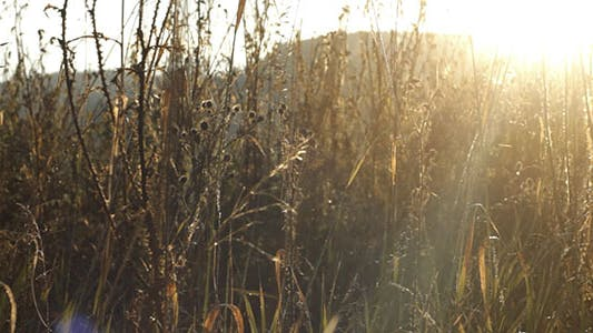Thumbnail for Dry Grass And Sunshine
