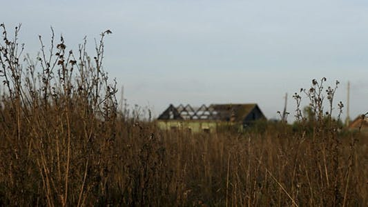 Thumbnail for Dry Stalks And Abandoned Village House