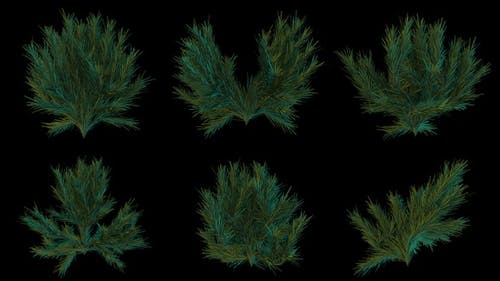 Green Spruce Leaves