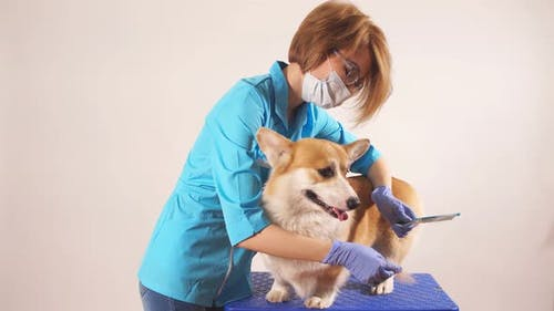 Caring Awesome Girl Brussing a Pet in the Hospital