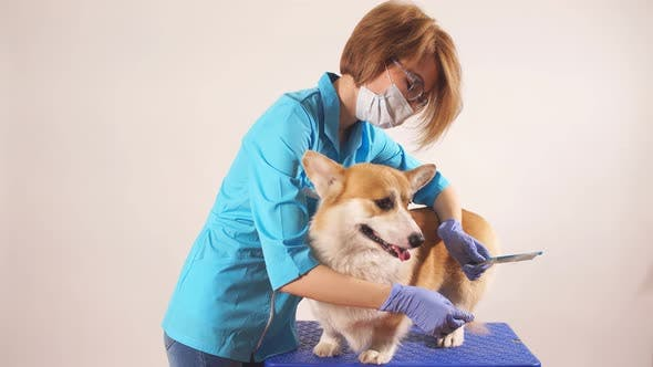 Thumbnail for Caring Awesome Girl Brussing a Pet in the Hospital