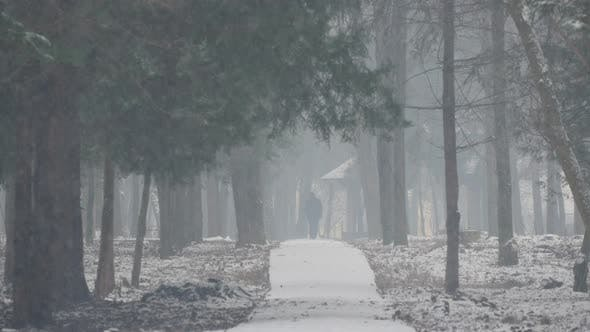 Thumbnail for Alley in a forest during snowfall