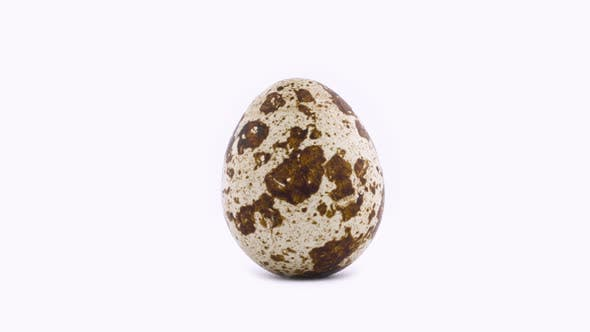 Thumbnail for Shooting of One Quail Egg Rotating on the Turntable, Isolated on the White Color Background. .