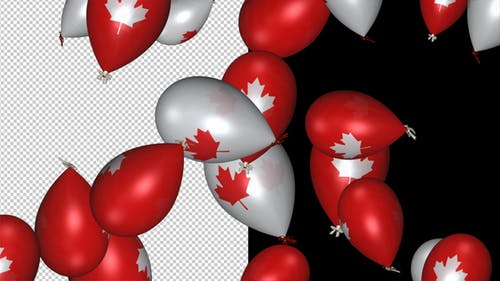 Canada Flag Balloons - White and Red - Flying Transition