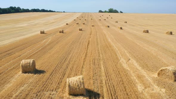 Thumbnail for Round Hay Bales At The Field 2