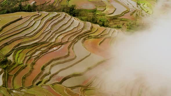 Aerial shot of the famous terraced rice fields of Yuanyang County China