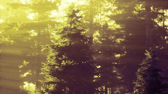 Misty Forest To the Rising Day