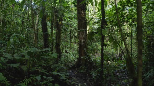 Thumbnail for Walking on a small footpath through a tropical rainforest