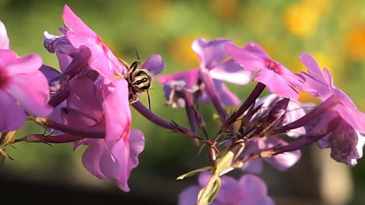 Bee Crawling On Flower