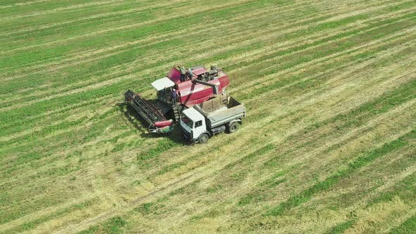 The Truck Takes the Harvest From the Harvester Directly Into the Field. View From Above