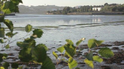 Low Tide In The Bay 01