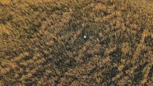 Children Play in a Golden Field