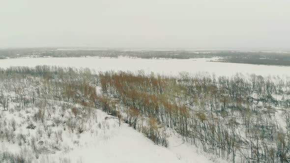 Thumbnail for Winter Forest with Bare Trees at Snowfall Aerial Panorama