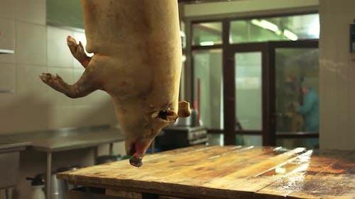 Slaughtered Pig Hanging on Hook at Butchery