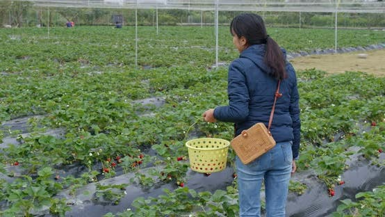 Cover Image for Woman tourist visit strawberry farm