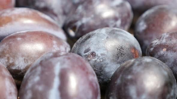 Thumbnail for Pile of organic plum fruit from genus Prunus  4K footage