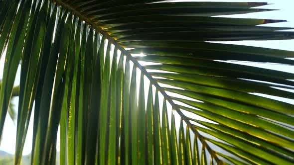 Thumbnail for Sun Rays Pass Through the Branches of Palm Trees Moving By Tropical Breeze