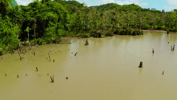 Thumbnail for Marshland in the Rainforest. Siargao,Philippines.