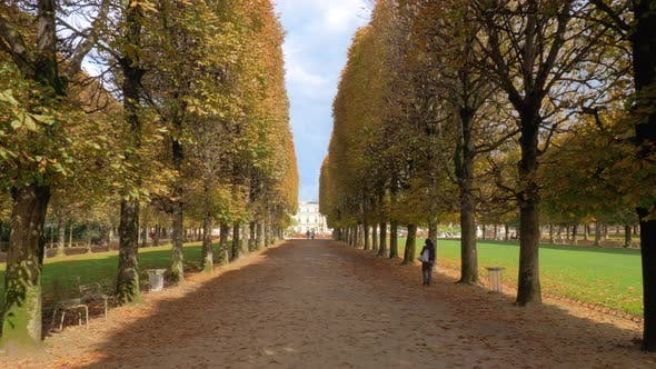 Thumbnail for Autumn Scene of Tree Lined Promenade in Luxembourg Gardens, Paris