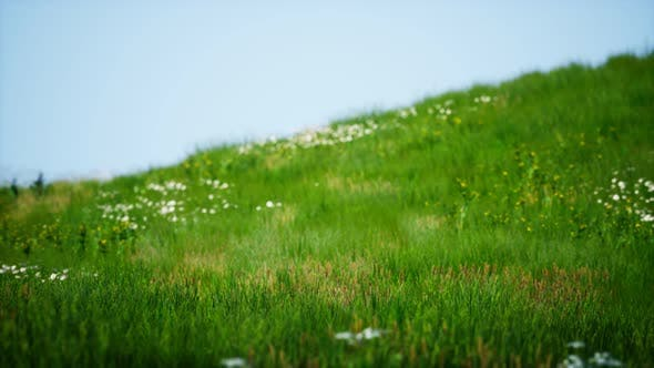 Thumbnail for Field of Green Fresh Grass Under Blue Sky