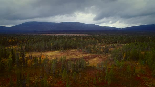Thumbnail for Aerial view of a colorful nordic pines forest in Estonia.