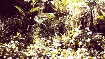 Close Up Jungle Grass and Plants