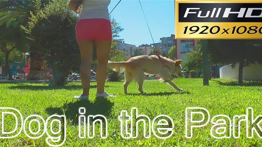 Thumbnail for Dog in the Park