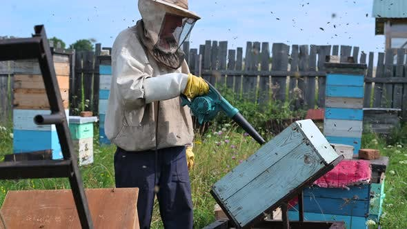 The Beekeeper Blows Out Bees From Hive with Blower To Remove Honeycomb