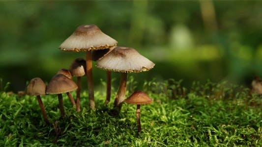 Thumbnail for Mushrooms On Moss