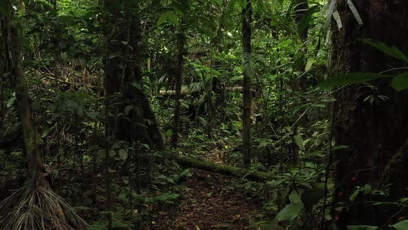 Thumbnail for Moving through a tropical rainforest full of branches insects green colors and large trees