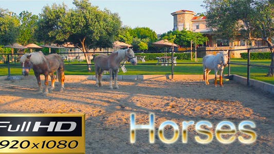 Thumbnail for Horses 3