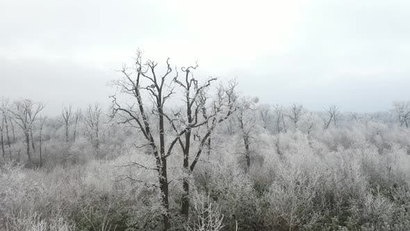 Rime in the Forest