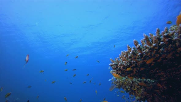 Thumbnail for Tropical Colourful Underwater Seascape