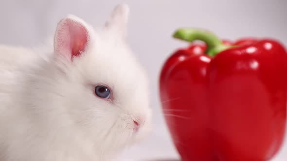 Cute white rabbit with red pepper