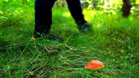 Thumbnail for Mushroom In Green Grass