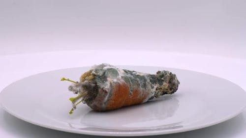 Rotten carrot covered with mold. Red carrots spoiled by time