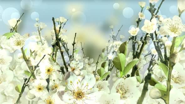 Thumbnail for Spring Blossom White