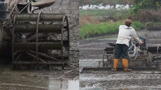 Thumbnail for Ploughing The Paddy  Field VI