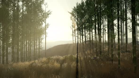 Thumbnail for Green Bamboo Forest in Hills