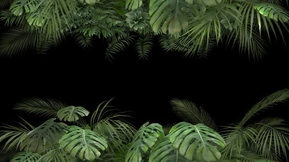 Thumbnail for Tropical Plant on an Alpha Channel