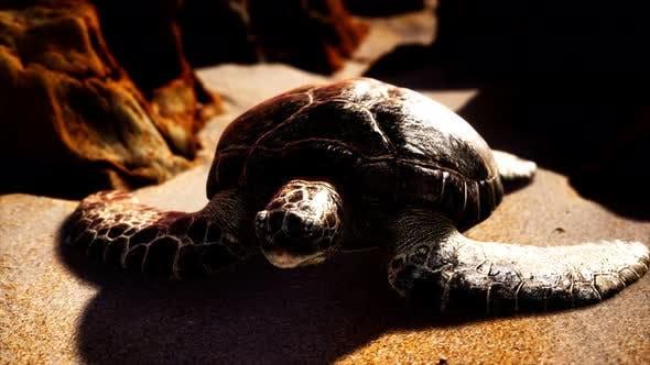 Sea Turtle at Beach Sand