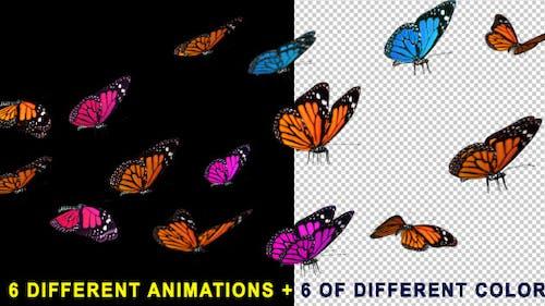 Flying Butterflies 60 FPS