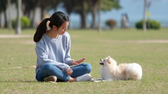Thumbnail for Young Woman training with her dog at outdoor park